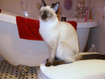 heidi-on-toilet-seat