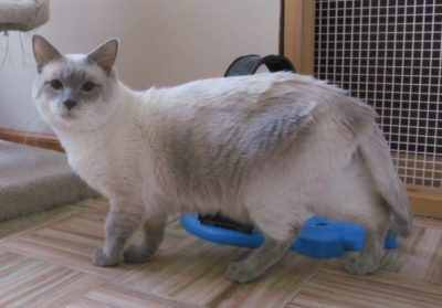 Our History of Katz Meow Siamese Cattery | Katz Meow Cattery